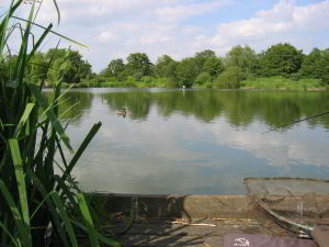 Pleasure Lake at Barford Lakes, available for day ticket fishing all year round